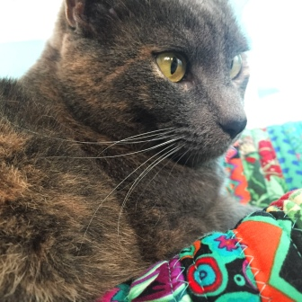 Lucy, a cat, sitting on Bailey Island Hobo bag by Aunties Two