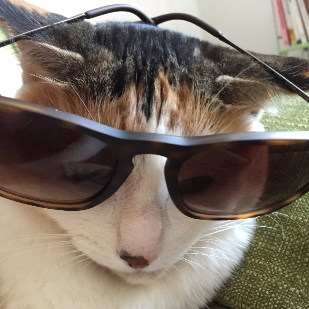 bubbles-the-cat