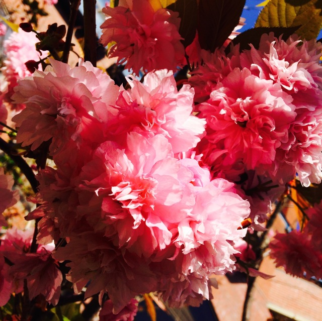big blooms