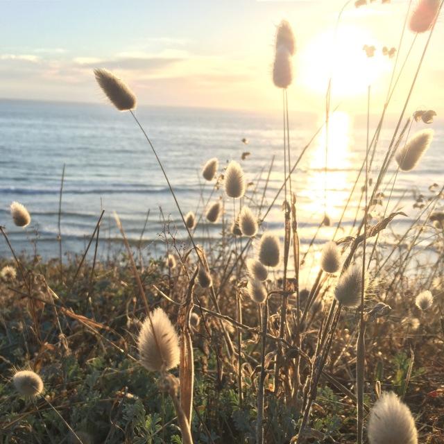 sunlight at sea ranch